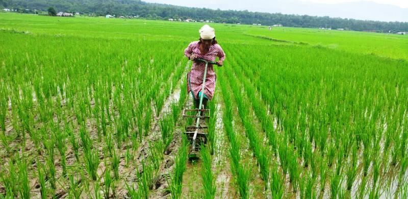 Image result for Rice Farming in Kenya