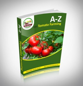tomato-farming-in-kenya-ebook