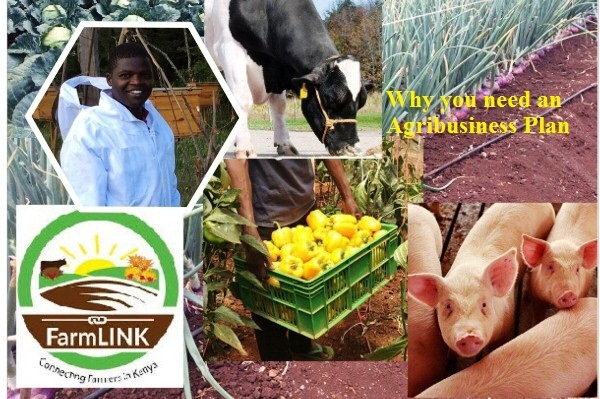 why you need an agribusiness plan to succeed