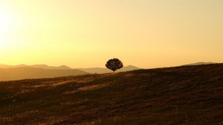 Tree on a hillside farm in Umbria, Italy.