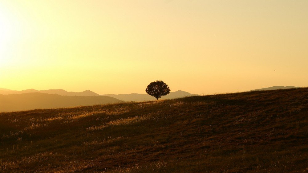 Tree on a hillside farm in Umbria, Italy.