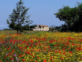 flower-meadow-calabria italy