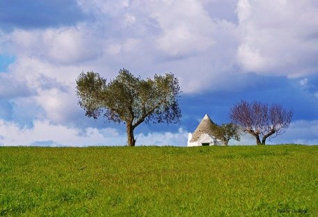 olive-grove-APUGLIA ITALY