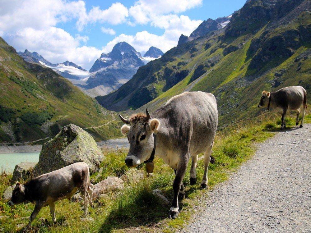Farmstays in Austria