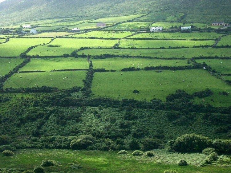 farmhouse-IRELAND-FARMSTAY