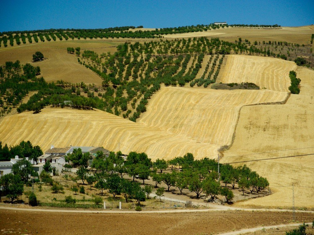Agroturismo Farm stay in Andalucia, south of Spain.