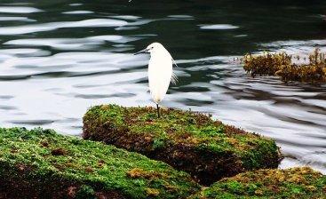Bird at Sun Moon Lake, Central Taiwan