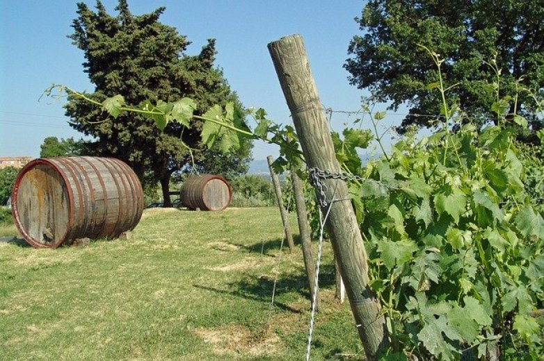 Vineyard agriturismo near San Gimignano, Tuscany