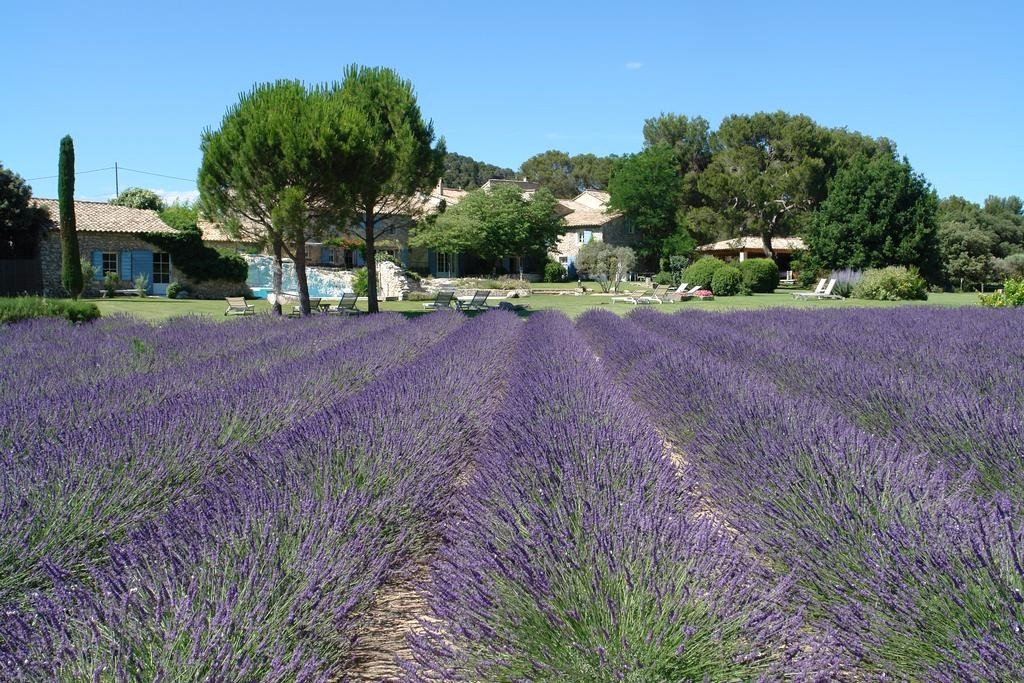 Lavender Fields France Map.Lavender Fields Provence France 2019 When Where Where To Stay
