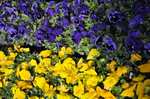 Sunny Lawn Farms landscaping flowers