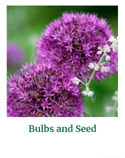 Shop for Bulbs & Seeds