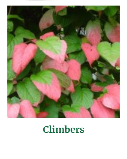 Shop for Climbers