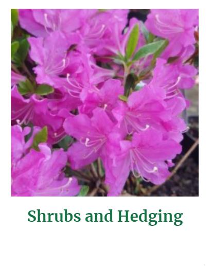 Shop Shrubs & Hedging