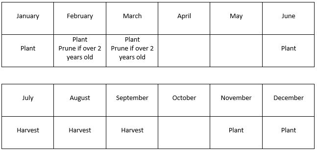 a month by month guide