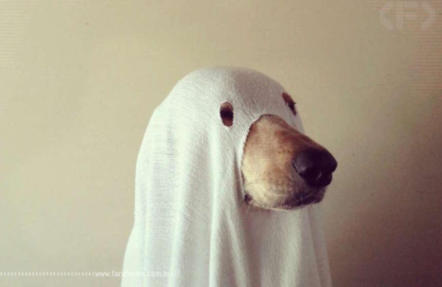 Editar é preciso - Cão fantasma - Blog Farofeiros