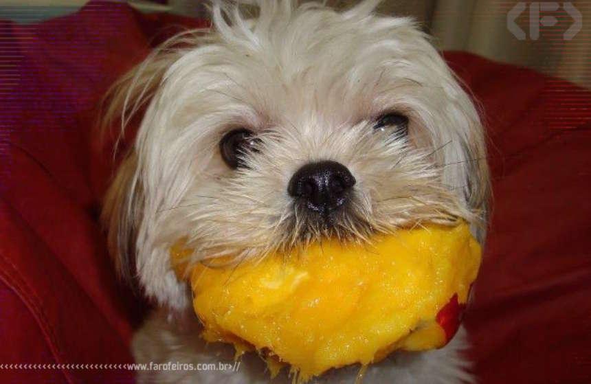 O cão chupando manga e outros capetas - Blog Farofeiros