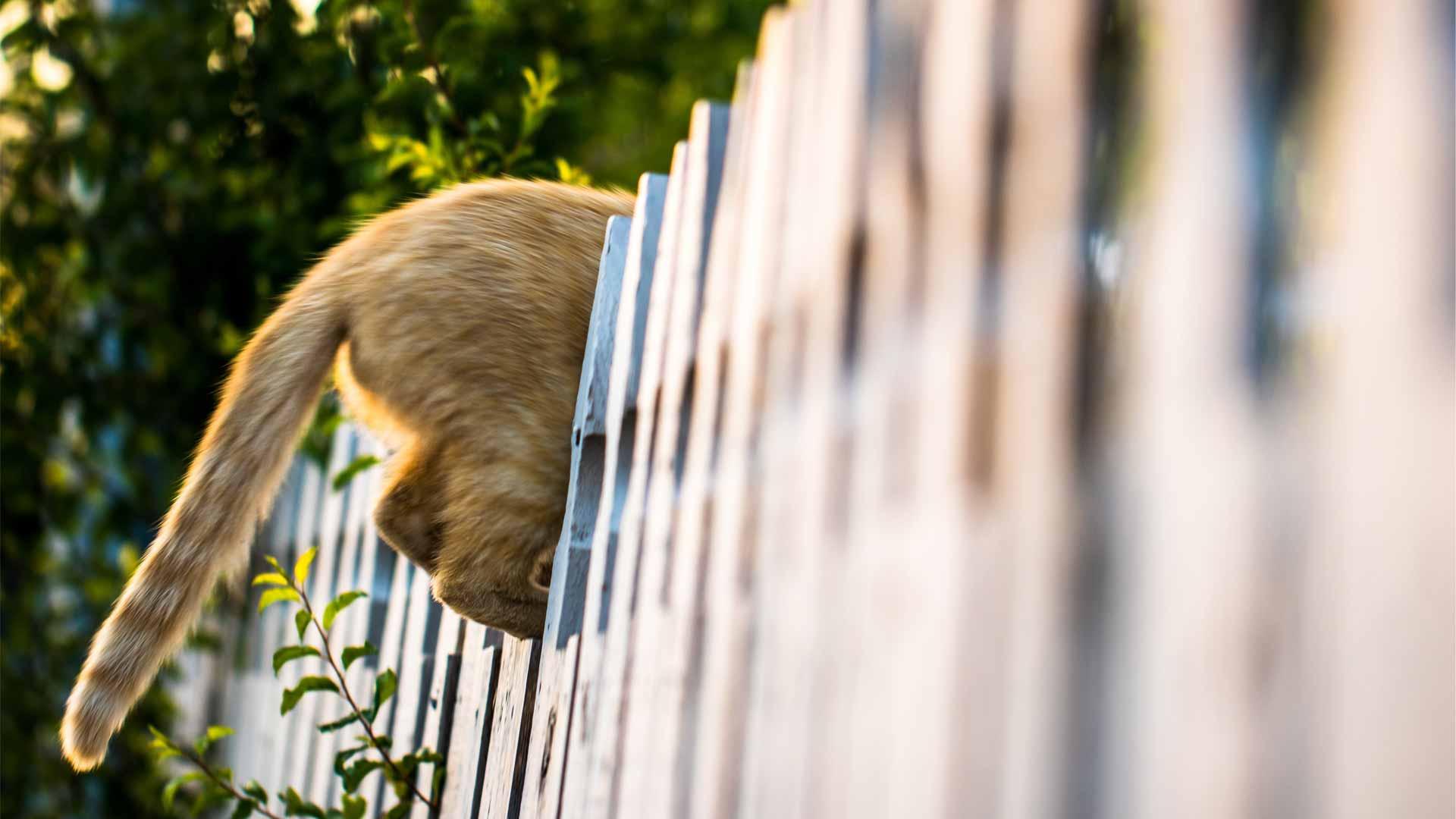 la-curiosita-del-gatto