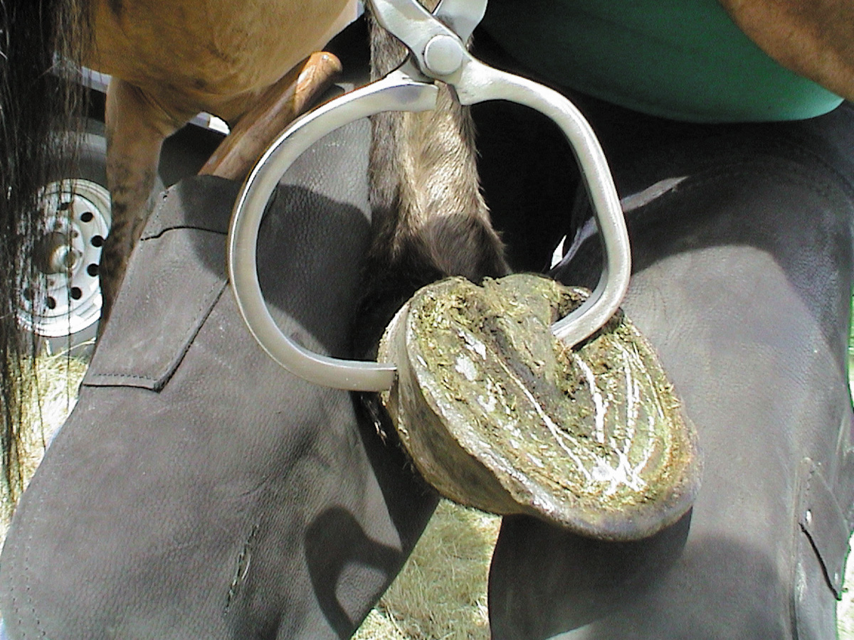 Htest 9 Farrier Products