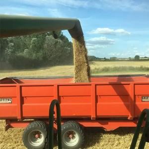 #farm24 seed