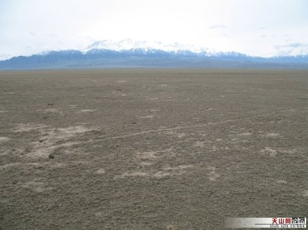 A Wusu field after the worms ate devestated the ground