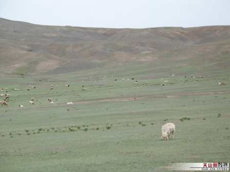A field in Wusu before the worm attack