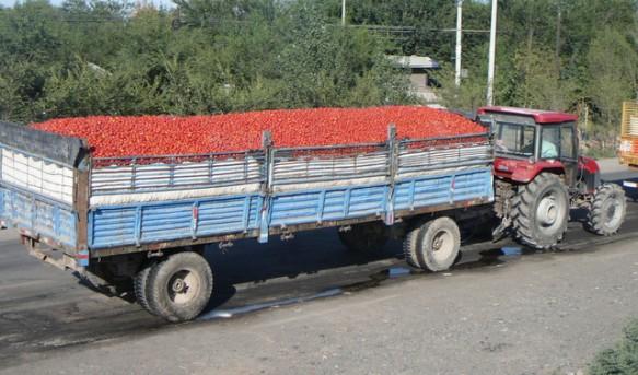 https://i0.wp.com/www.farwestchina.com/wp-content/uploads/2011/08/Tomato-Transportation-583x343.jpg?resize=583%2C343