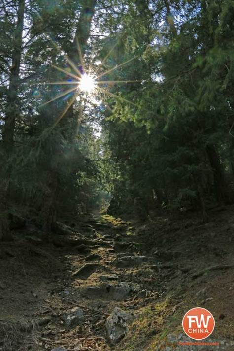 The sun peaking through trees along a hiking trail in Xinjiang's Heavenly Lake nature preserve