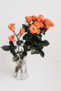 Photo of coral colored roses