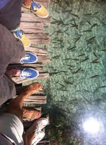 hanging araound with my friends in Plitvice lakes, summer fun, adventure touring, wearing the vans, all stars