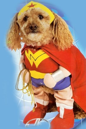fantasia cachorro dog maravilha
