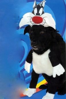 fantasia cachorro frajola