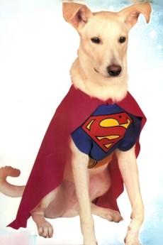 fantasia cachorro super dog