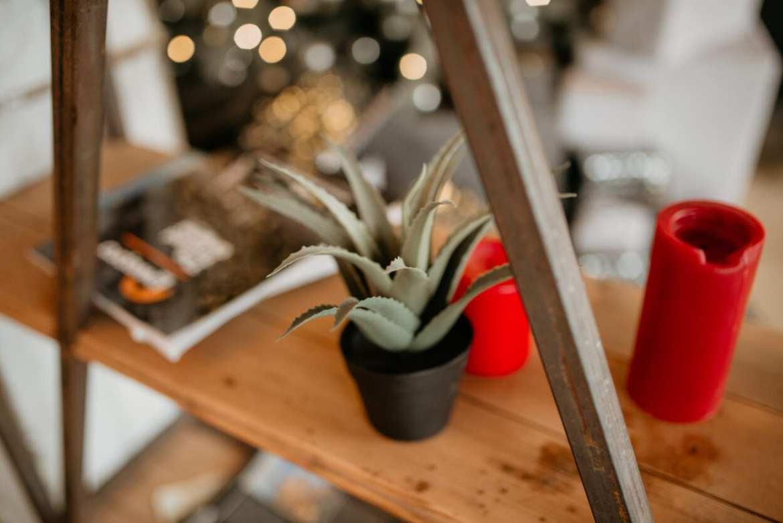 Aloe Vera é aliada da pele em amadurecimento