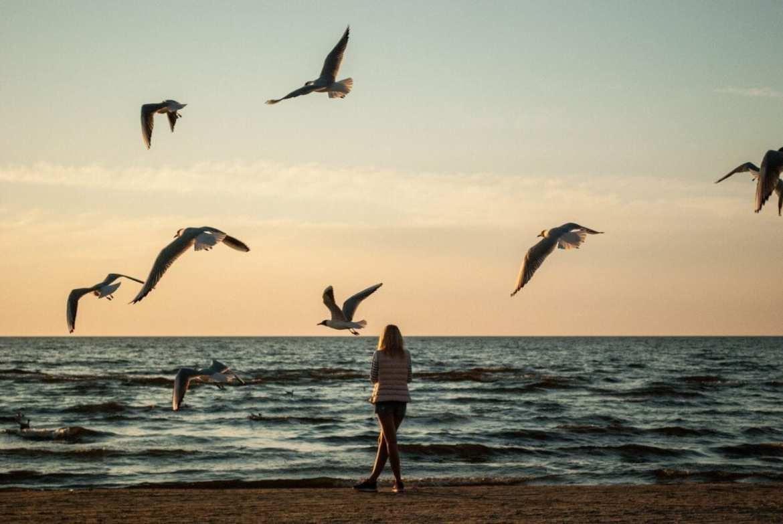 Como lidar com a solidão - Foto de mulher sozinha na praia durante o por do sol, cercada de andorinhas