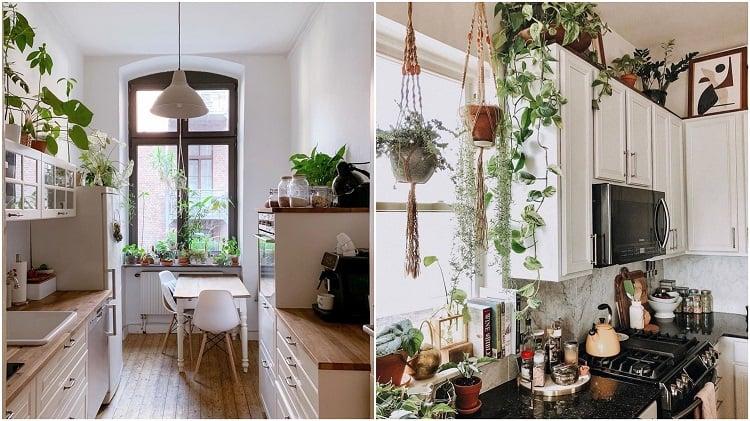 duas cozinhas com armários brancos e vasos de plantas