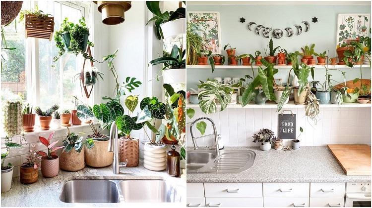 pias de cozinha decoradas com vasos de planta