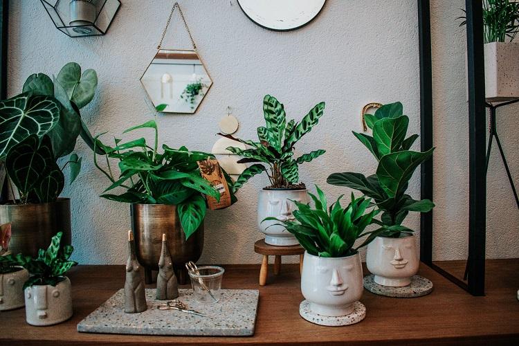 vasos de plantas em cima de um móvel de madeira