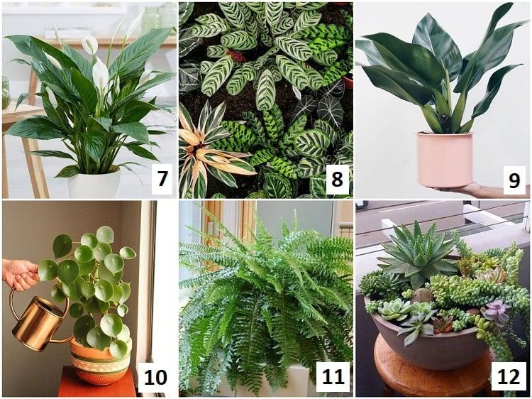 montagem com seis variedades de plantas para selva urbana