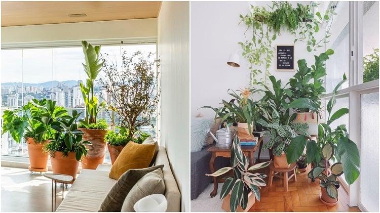duas composições de vasos de plantas ao lado da janela da sala