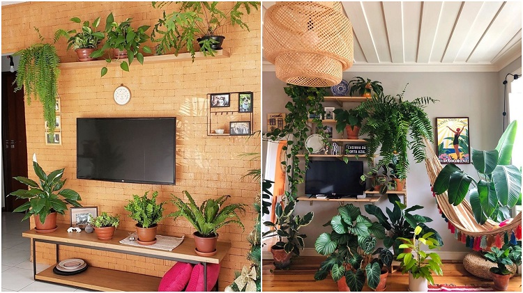 racks decorados com vasos de plantas