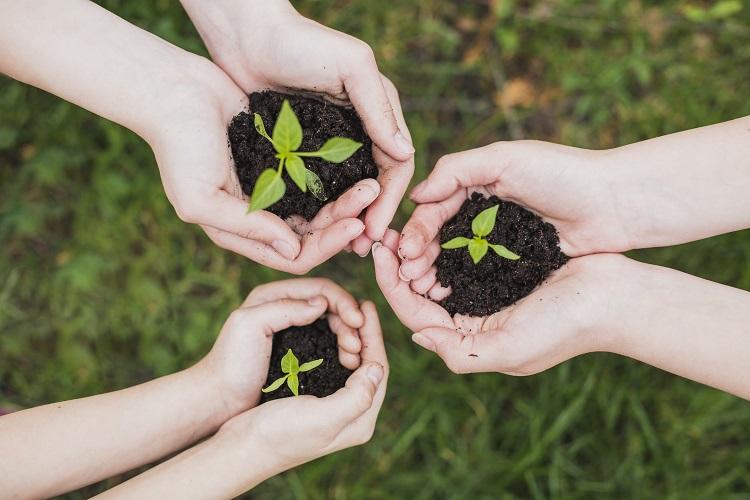 três pares de mãos segurando mudas de plantas