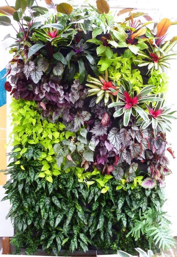 Jardim vertical colorido