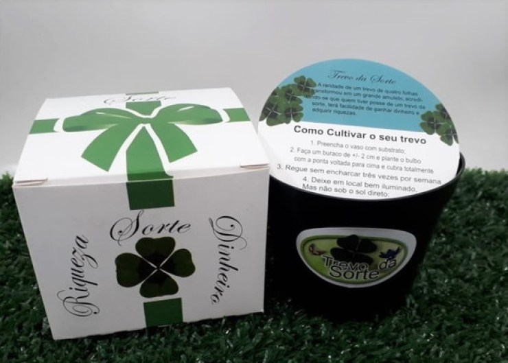 Mini presente - Kit da sorte contendo sementes de trevo