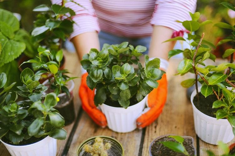 mãos com luvas segurando vaso de plantas