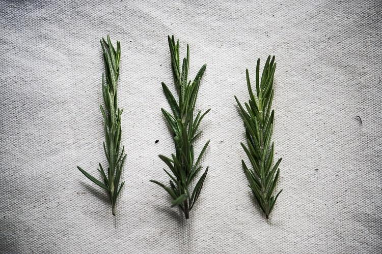 ramos de planta em cima de tecido