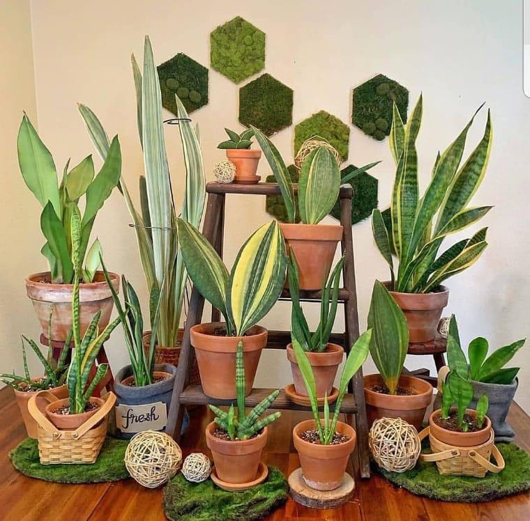 Escada com plantas