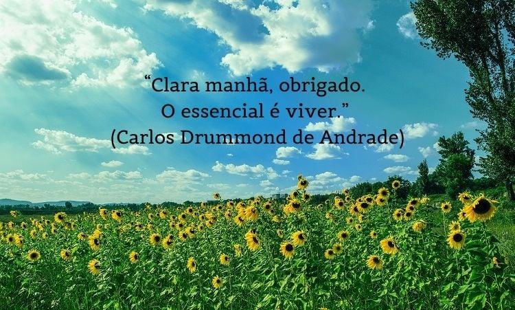 citação de bom dia Carlos Drummond de Andrade