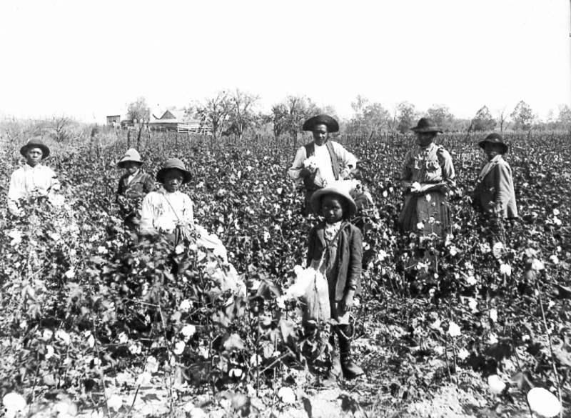 Trabalhadores negros em um fazenda de algodão nos Estados Unidos, c. 1890.