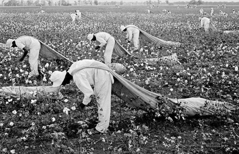 Catadores de algodão no Texas, c 1960.