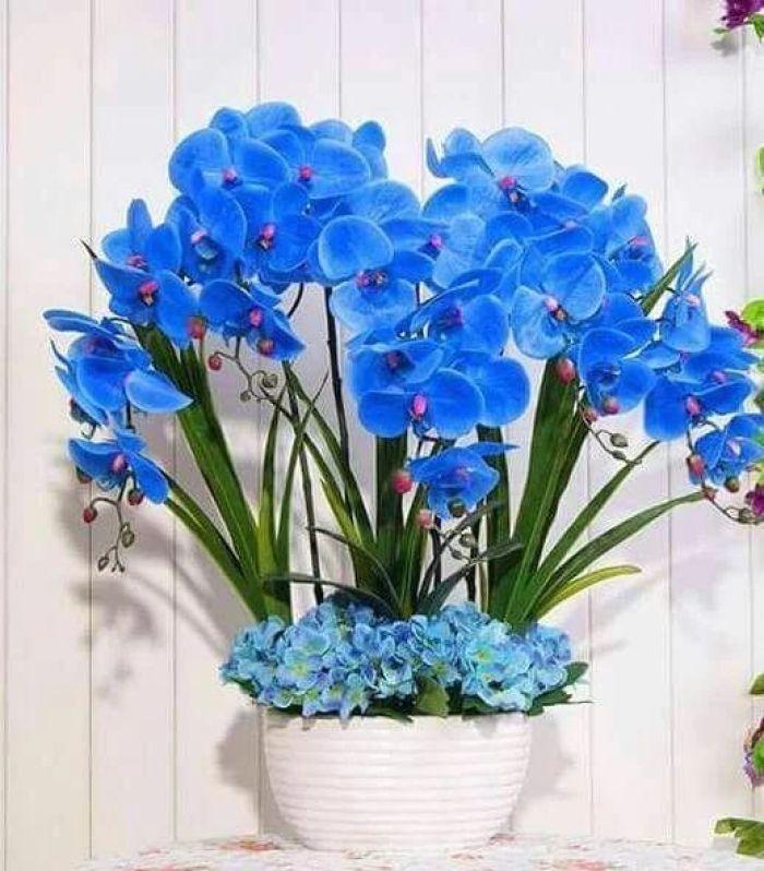 Flores para dentro de casa azuis.